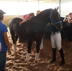 2014 od stables dp3.jpg