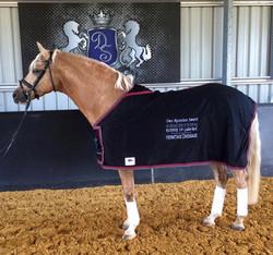 WA 2014 Runner Up Horse of the Year