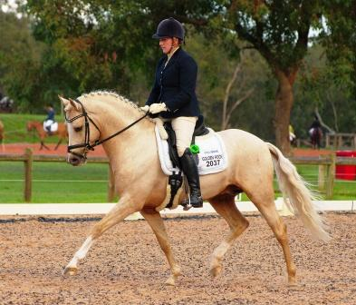 PDC Dressage May 2014