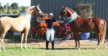 Elite stallions