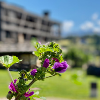 Hotel Pfösl Blumen pracht