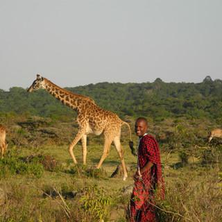 Maasai jagen nicht