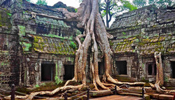 attraction-Ta Prohm Temple Daily Tours
