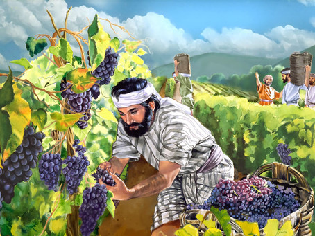 Grapes upon Grapes and Amazing Grace