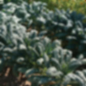 02123g_01_toscano.jpg