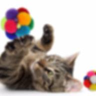 cat playing Catomic ball_edited.jpg