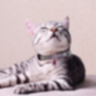cat with cat collars for GD website 2_edited.jpg