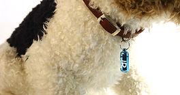 dog with blue TUUB.jpg