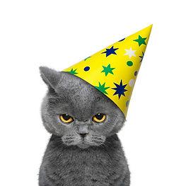 cat celebrating 2B.jpg