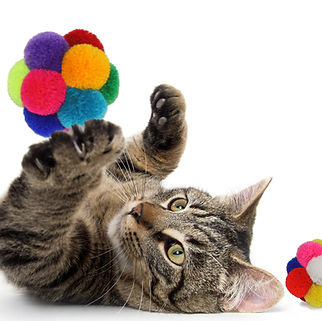 cat playing Catomic ball no bell.jpg