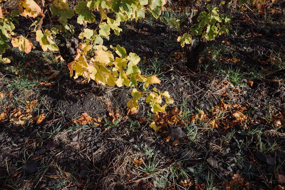 automne-2.jpg