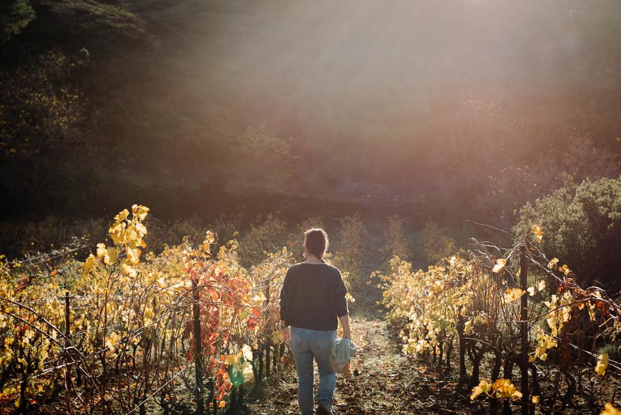 automne-9.jpg