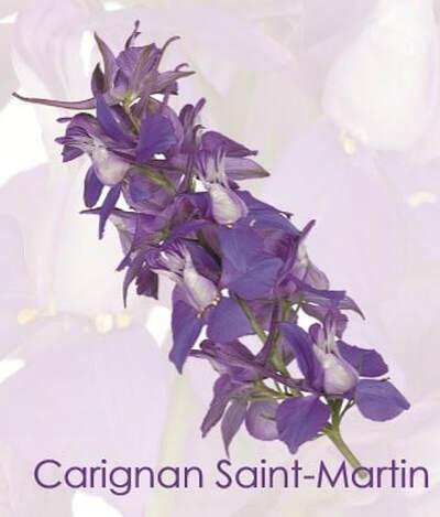 carignan-saint-martin.jpg