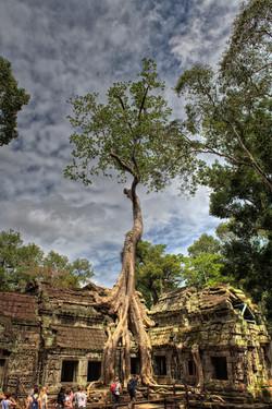 Tomb Raider or Ta Prohm Temple