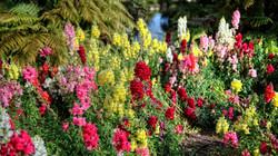 Flowers in Wai oTapu Thermal Park