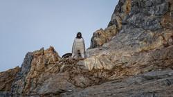 Penguins at O'Higgins Base