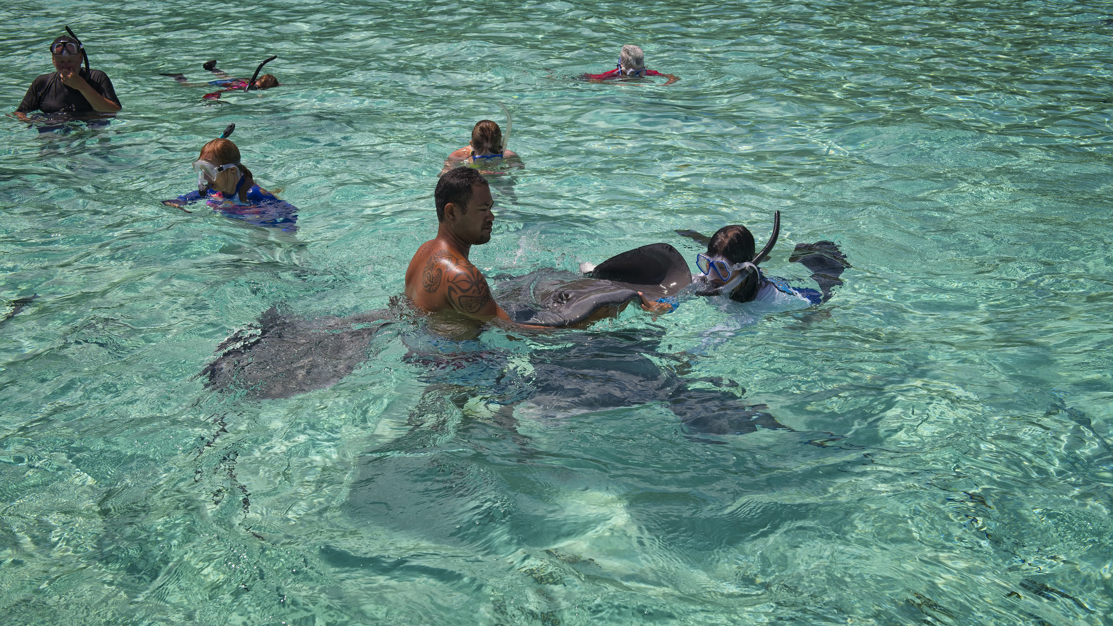 Dirce with Stingrays