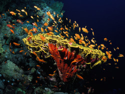 Coral Head in the Red Sea