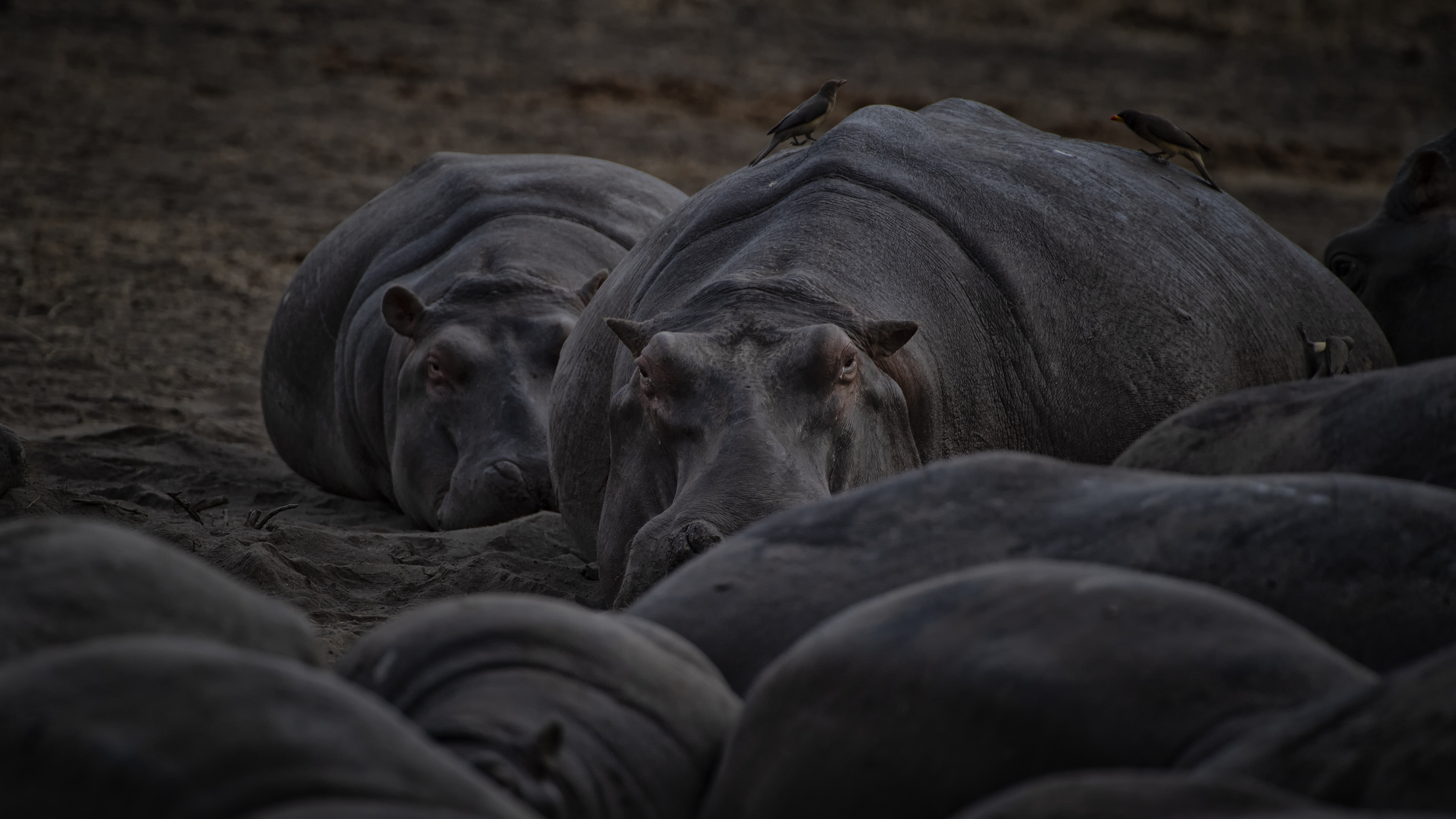 Hippo Convention