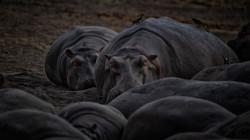 Hippo Convention