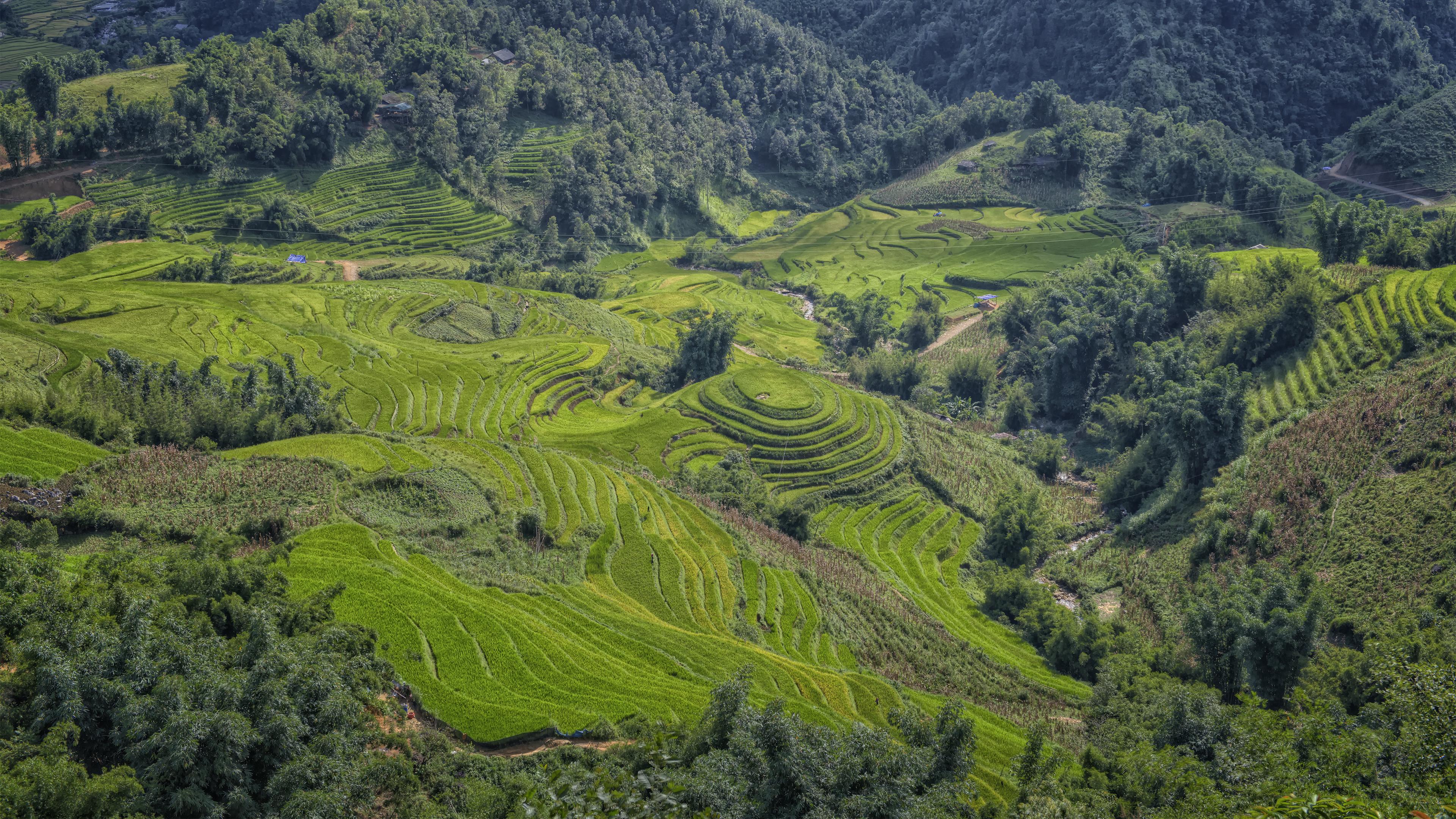 Rice Terrace in Sapa