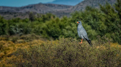 Sanbona wildlife