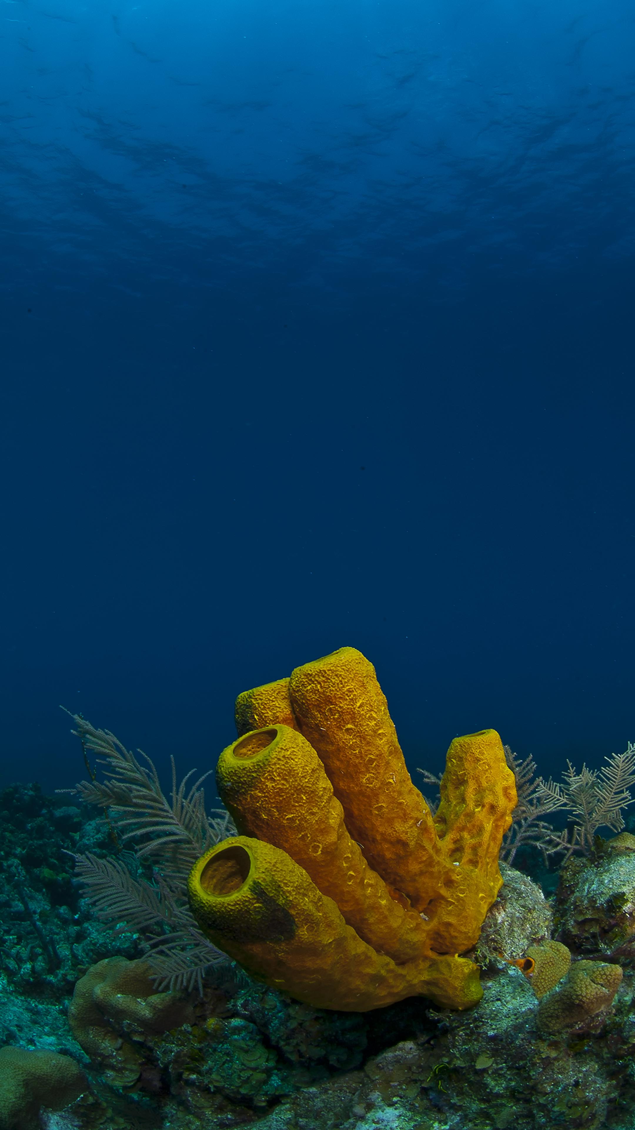 Sponge in Blue Water