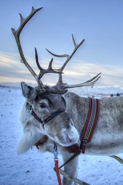 We found Rudolf