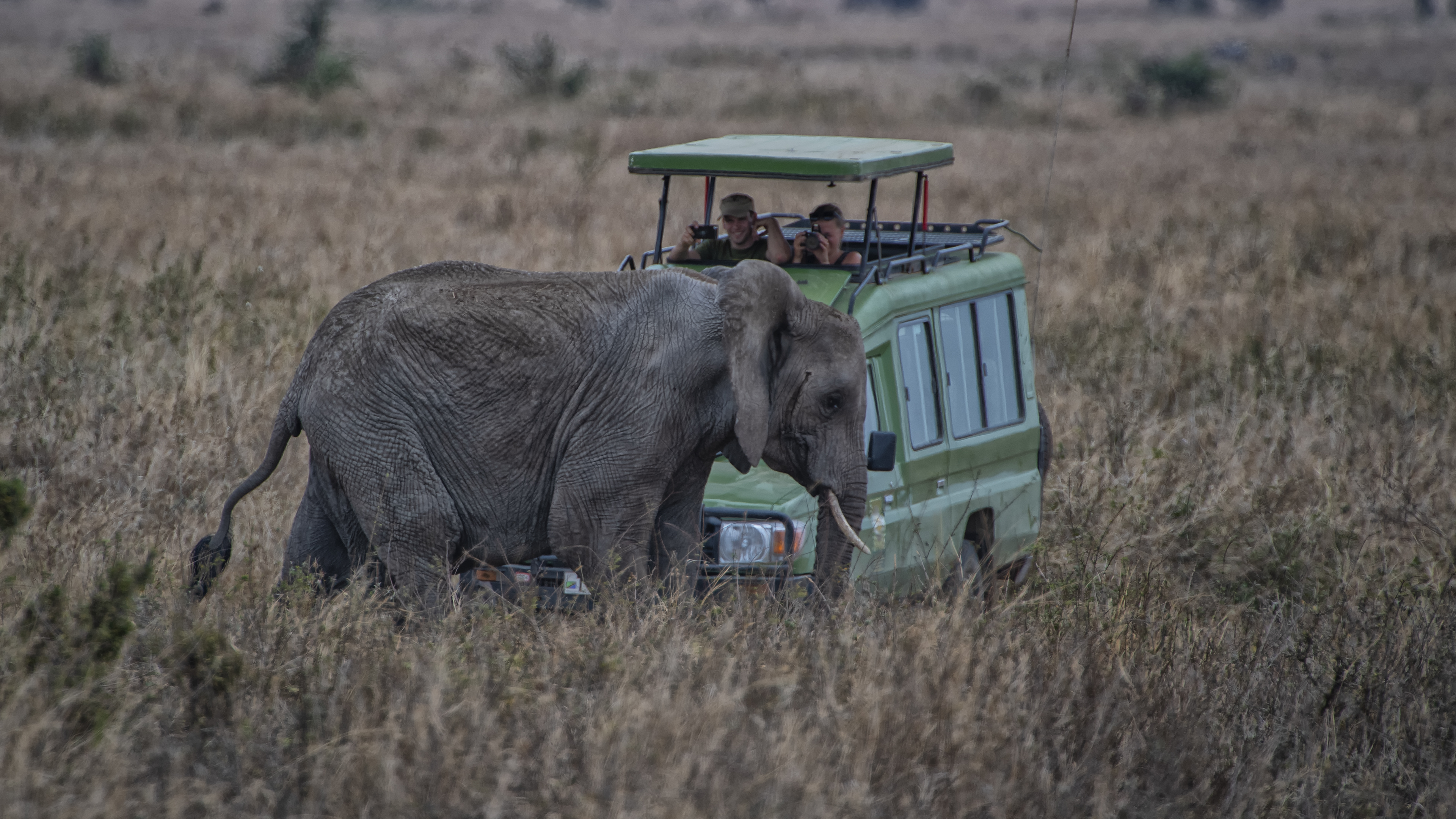 Elephant and Truck