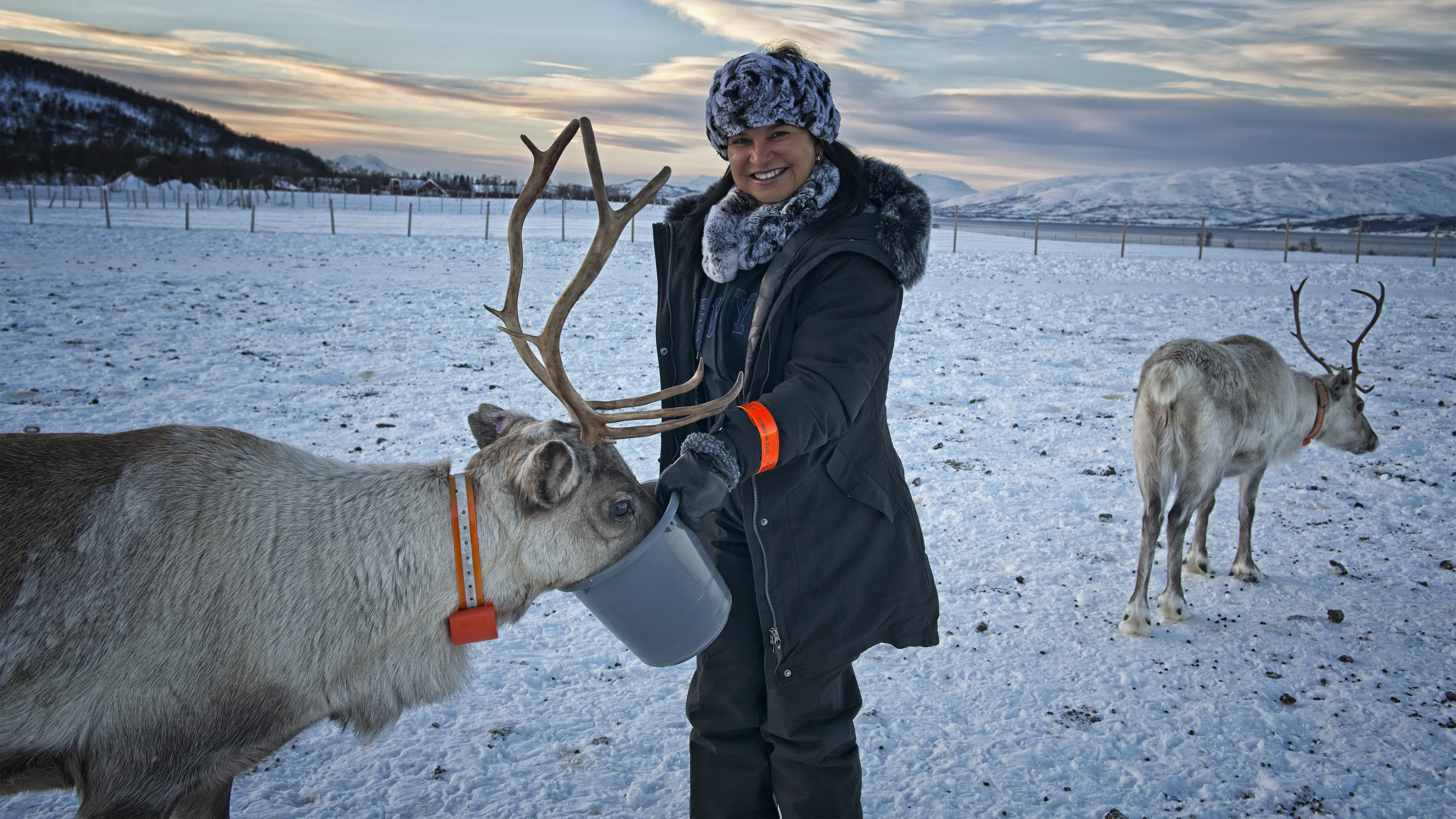 Giving Treats to the Reindeer