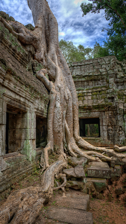 Ta Prohm (Tomb Raider) in Cambodia