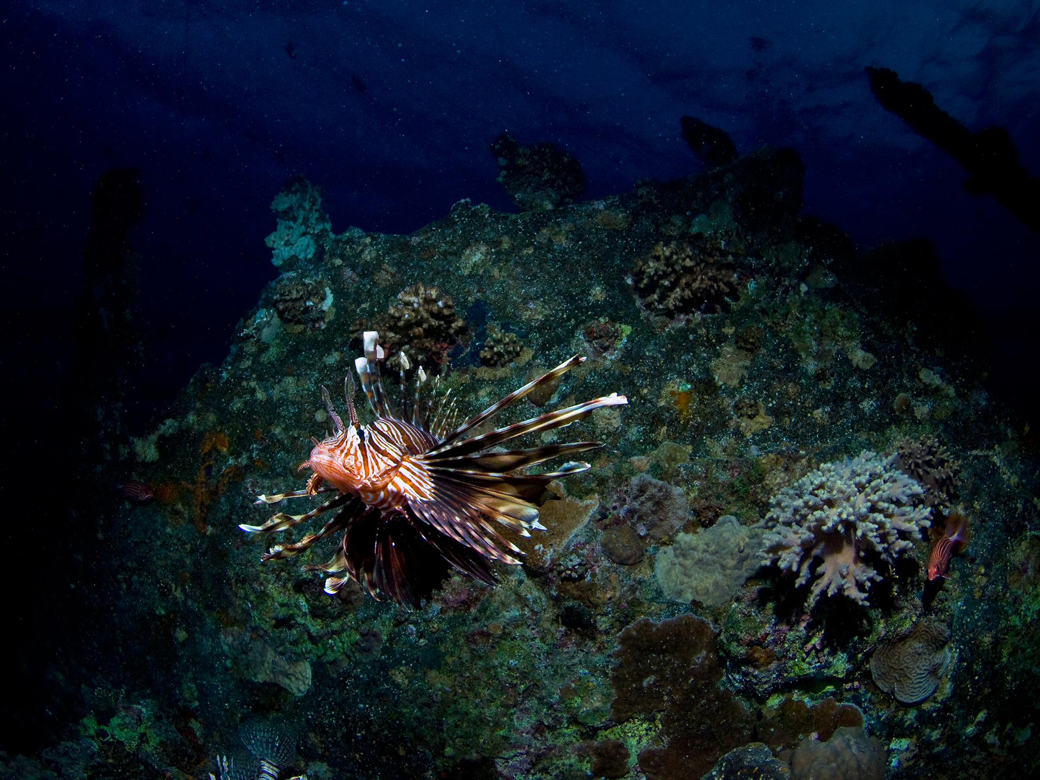 Lionfish on Barge