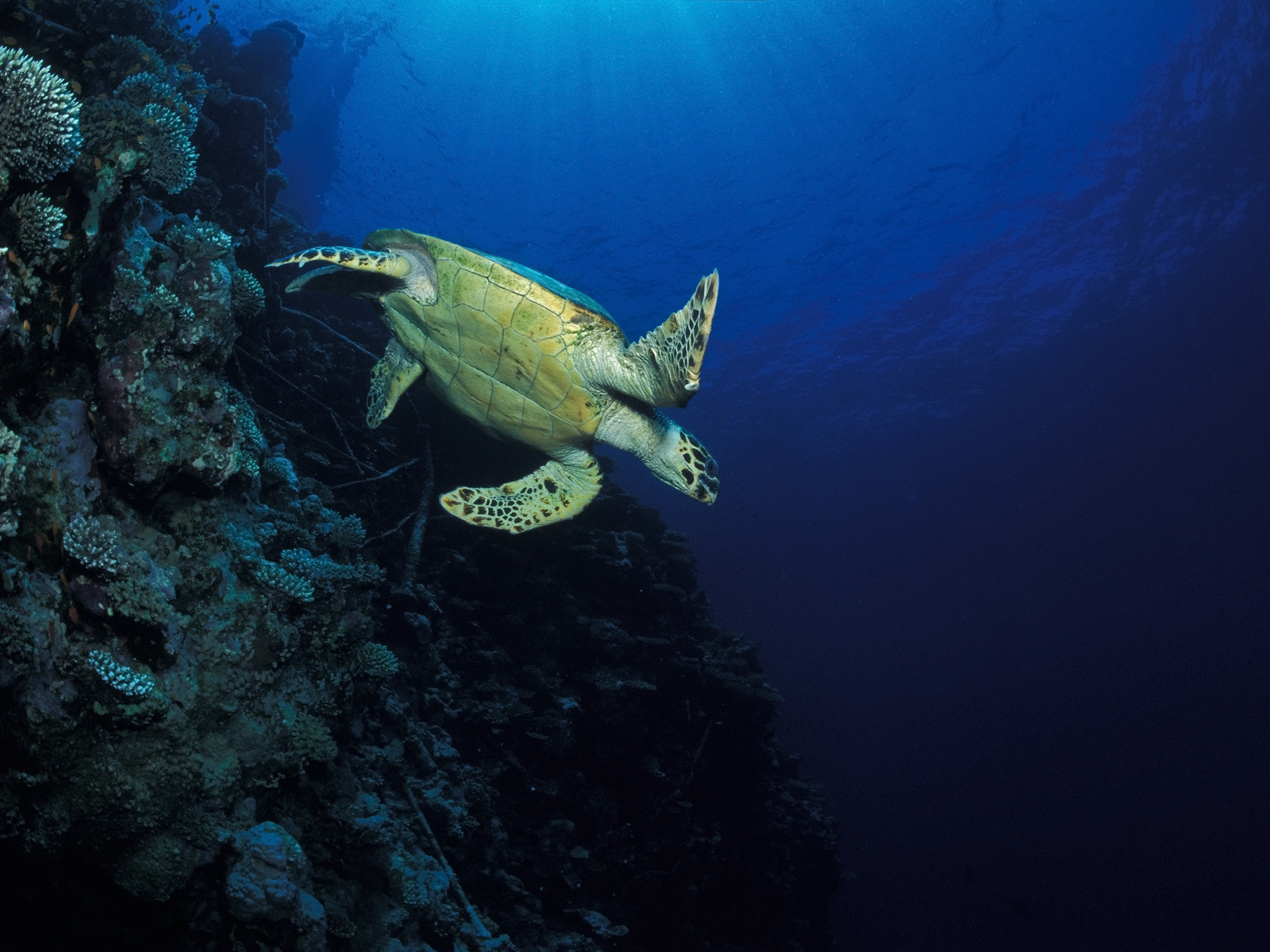 Turtle on Wall