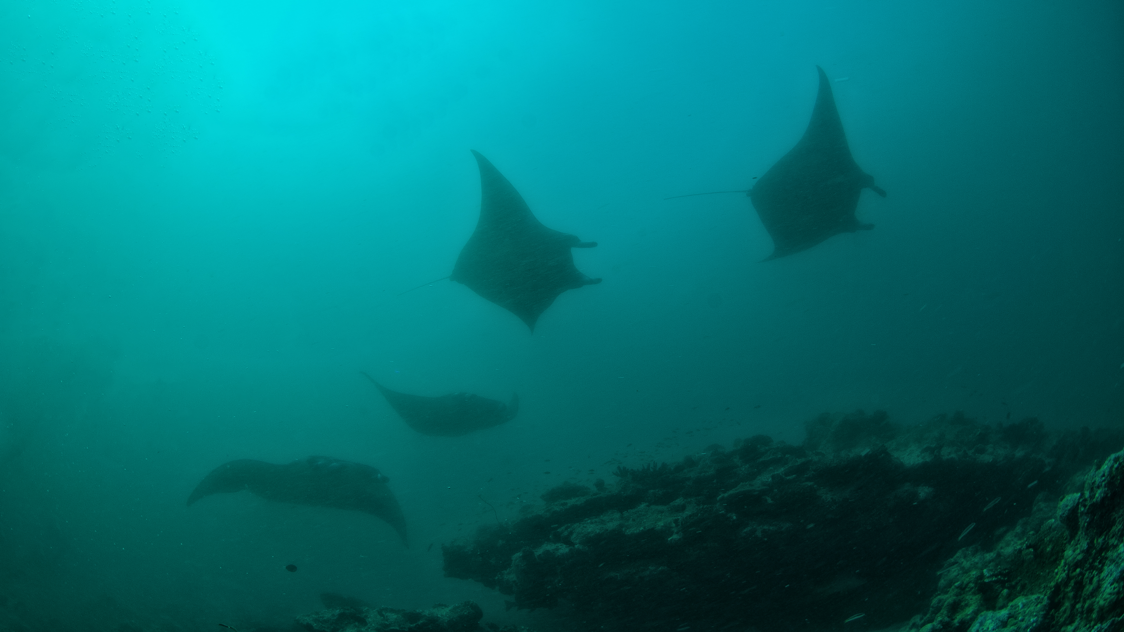 Manta Ray Cleaning Station