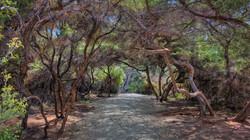 Wai oTapu Thermal Park