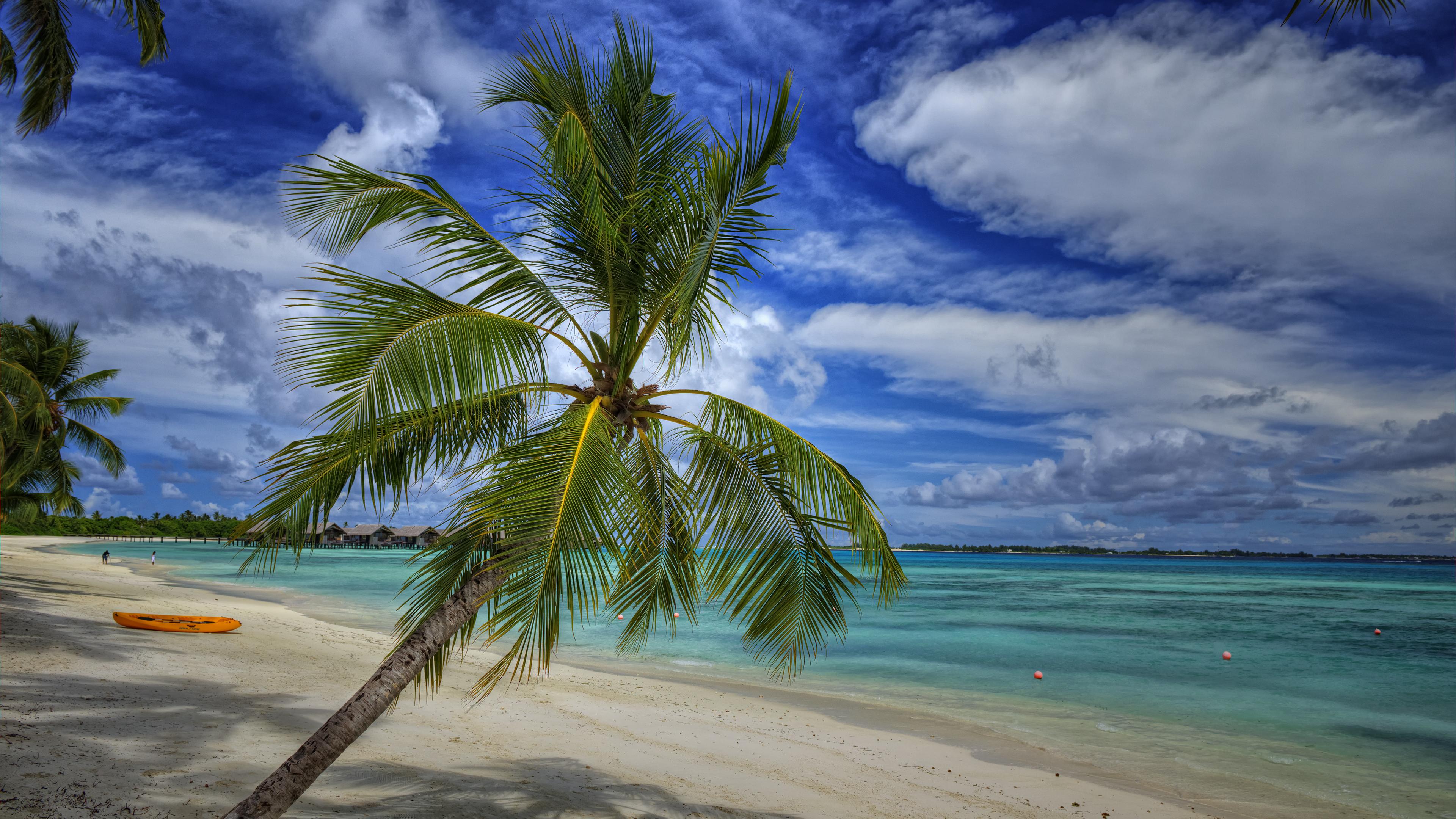 Leaning Palmtree
