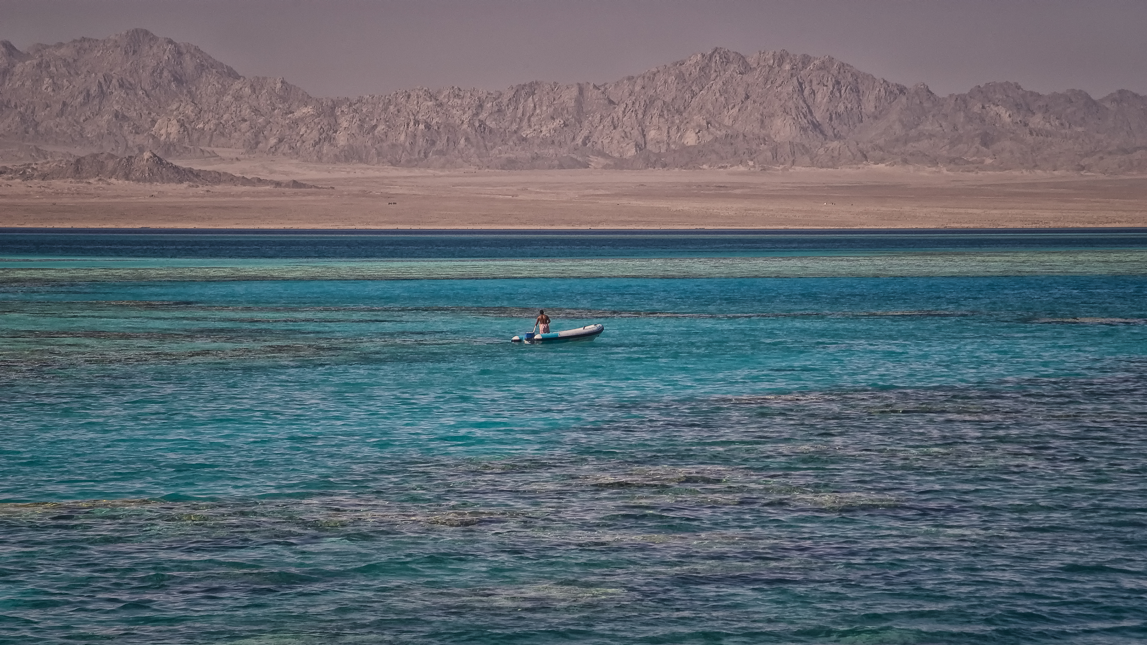 Red Sea Life