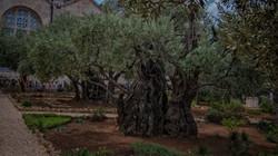 Garden of Gethsemane or Mount of Olives