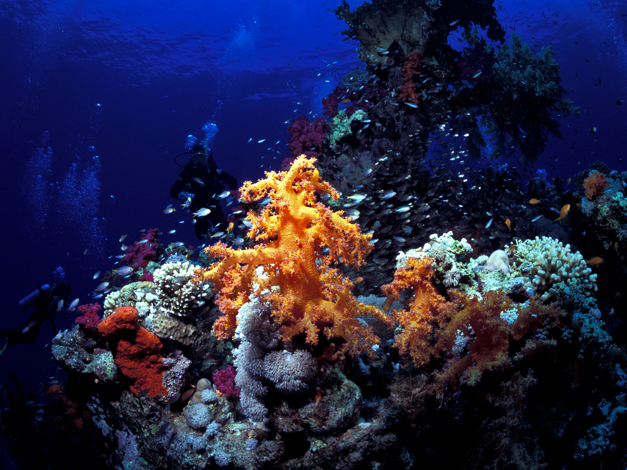 Coral Head with Soft Coral