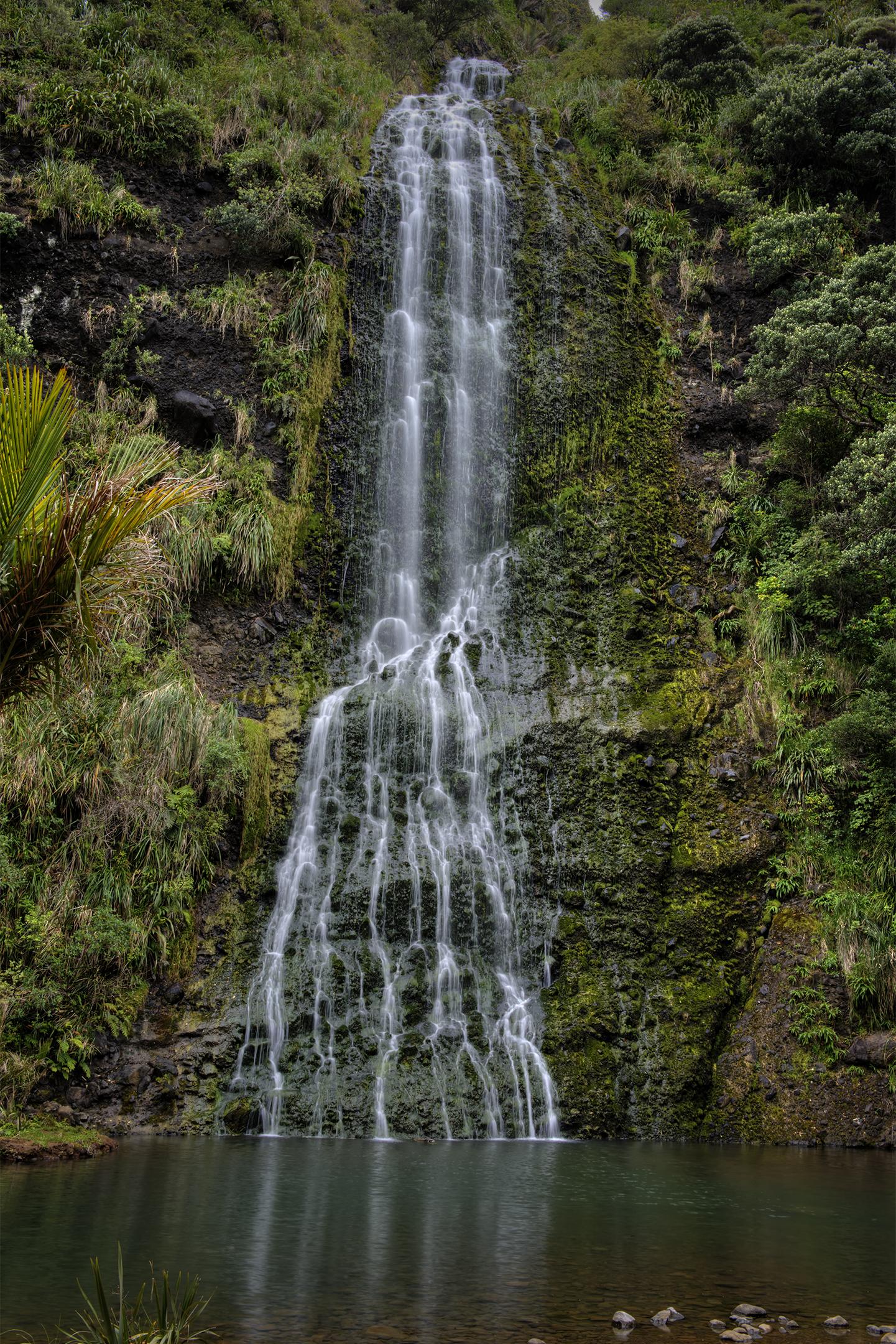 Arataki Rainforest