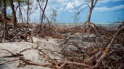 Mangroves in Jericoacoara