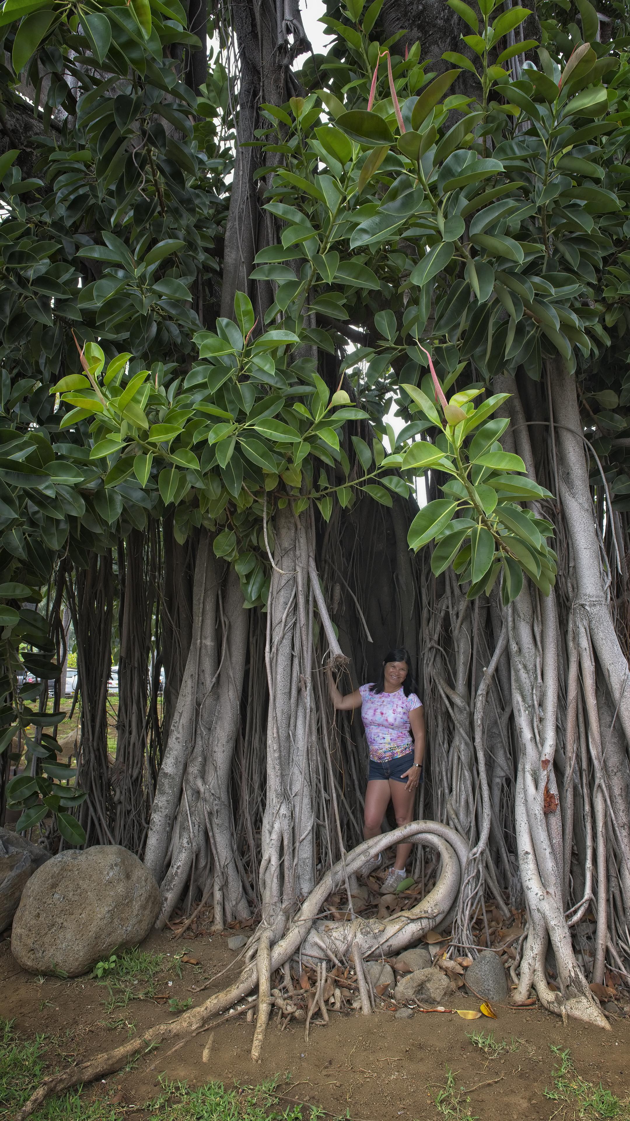 Tahiti Forest