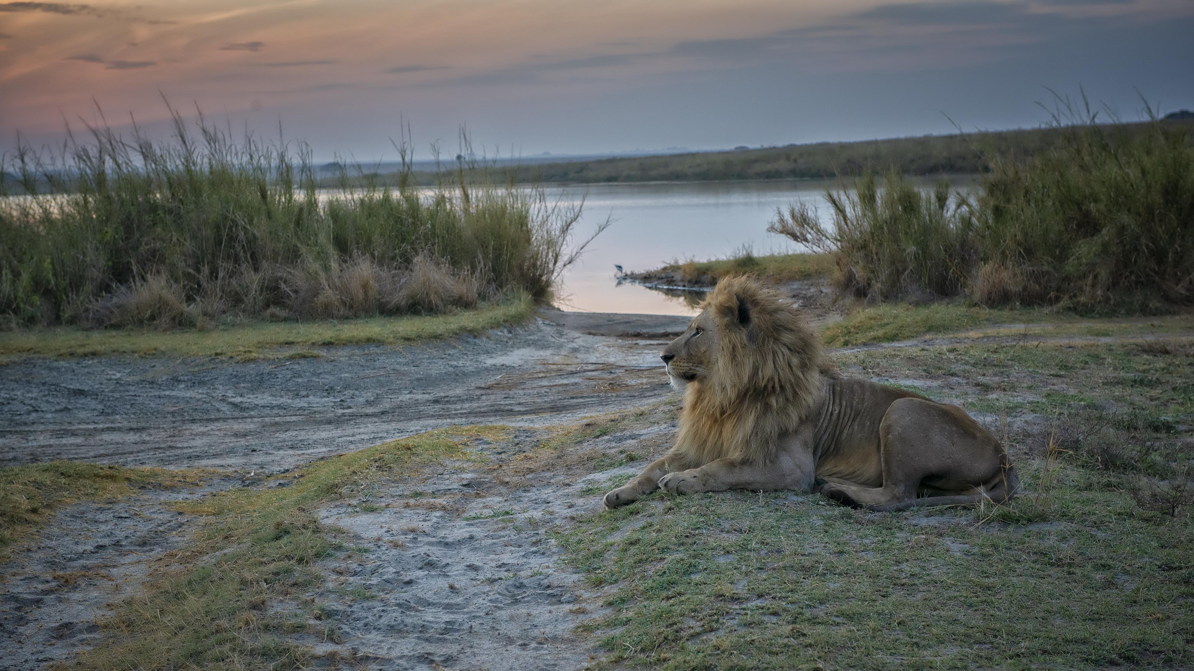 King in Tanzania