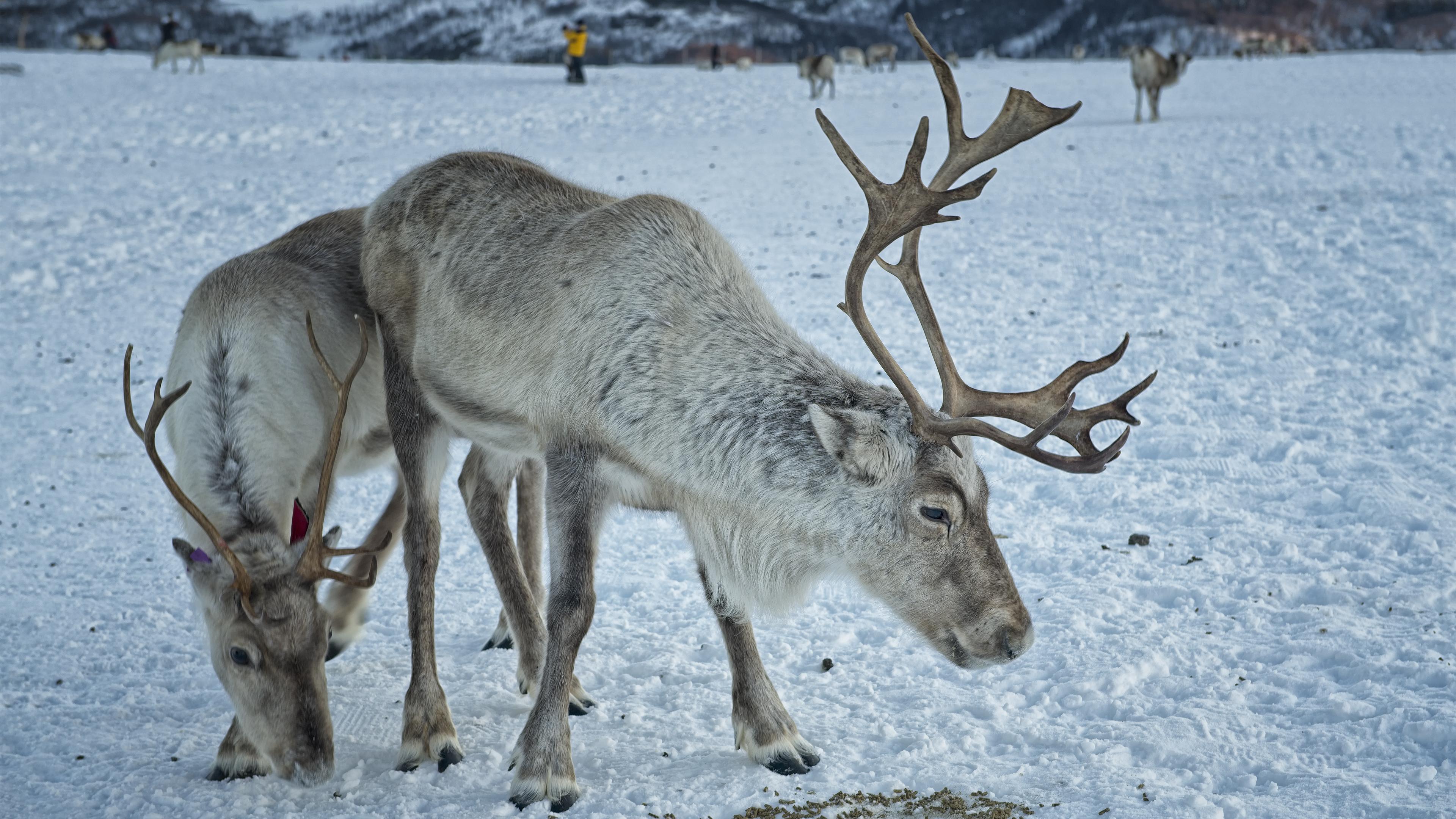 We Found Rudolf in Tromso