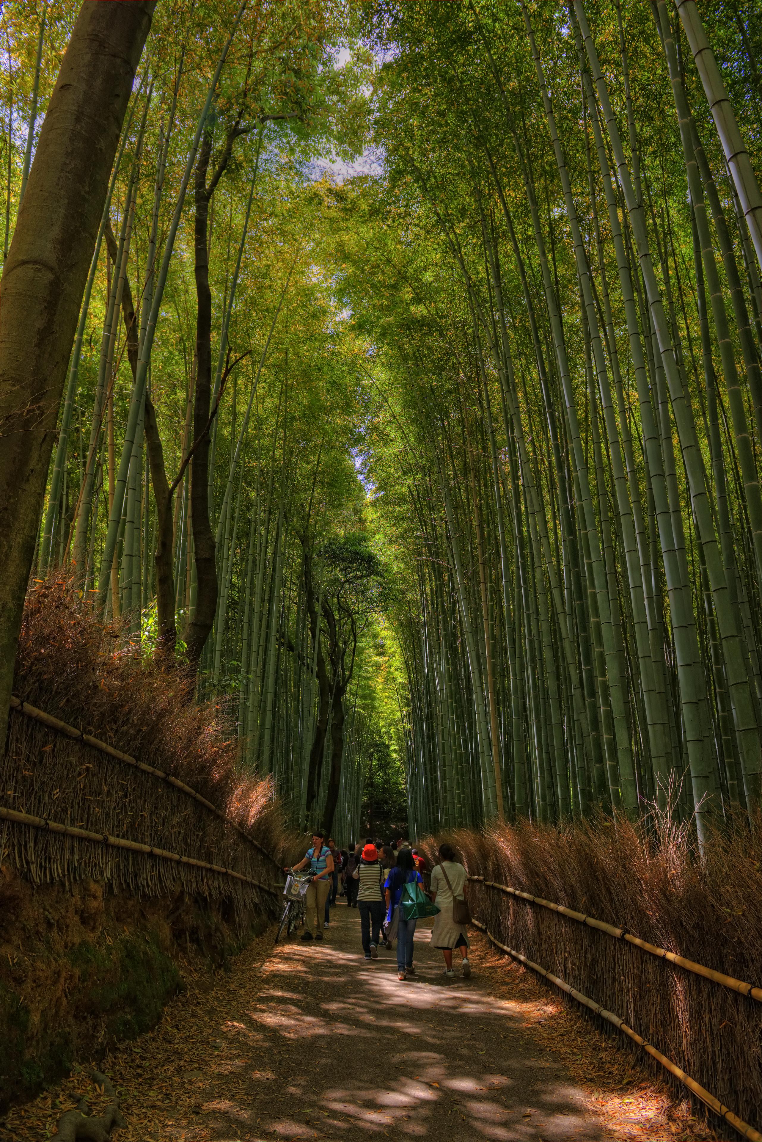 Bamboo Forest, or Arashiyama Bamboo Grove