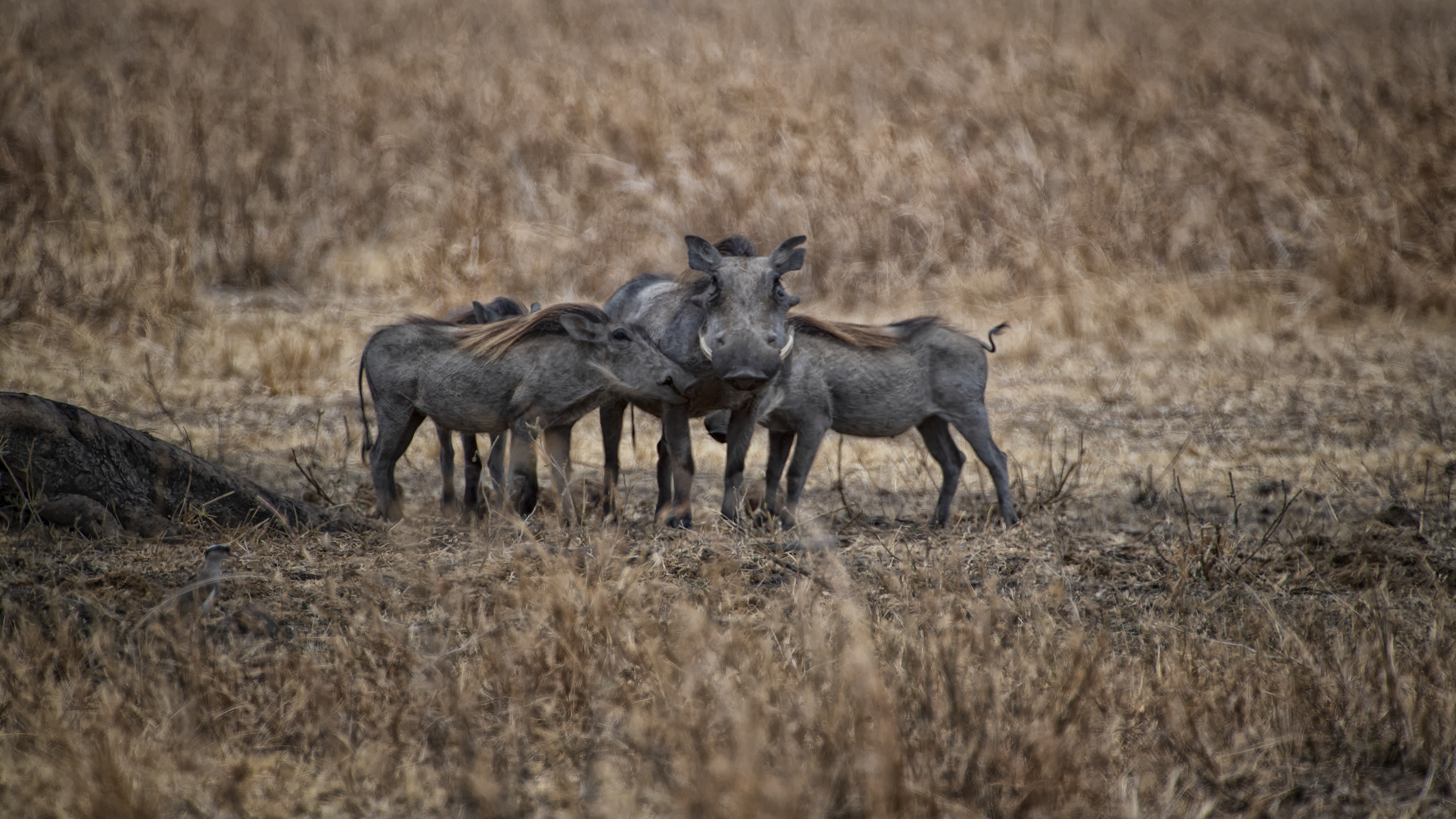 Warthog Convention