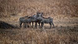 Warthog Convention