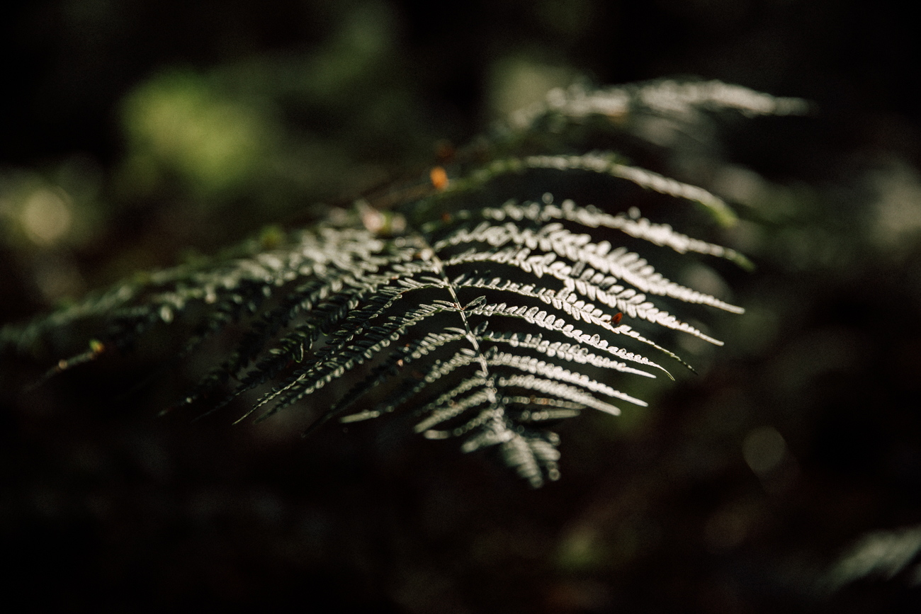 foret-5