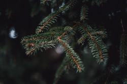 Mariage dans la forêt