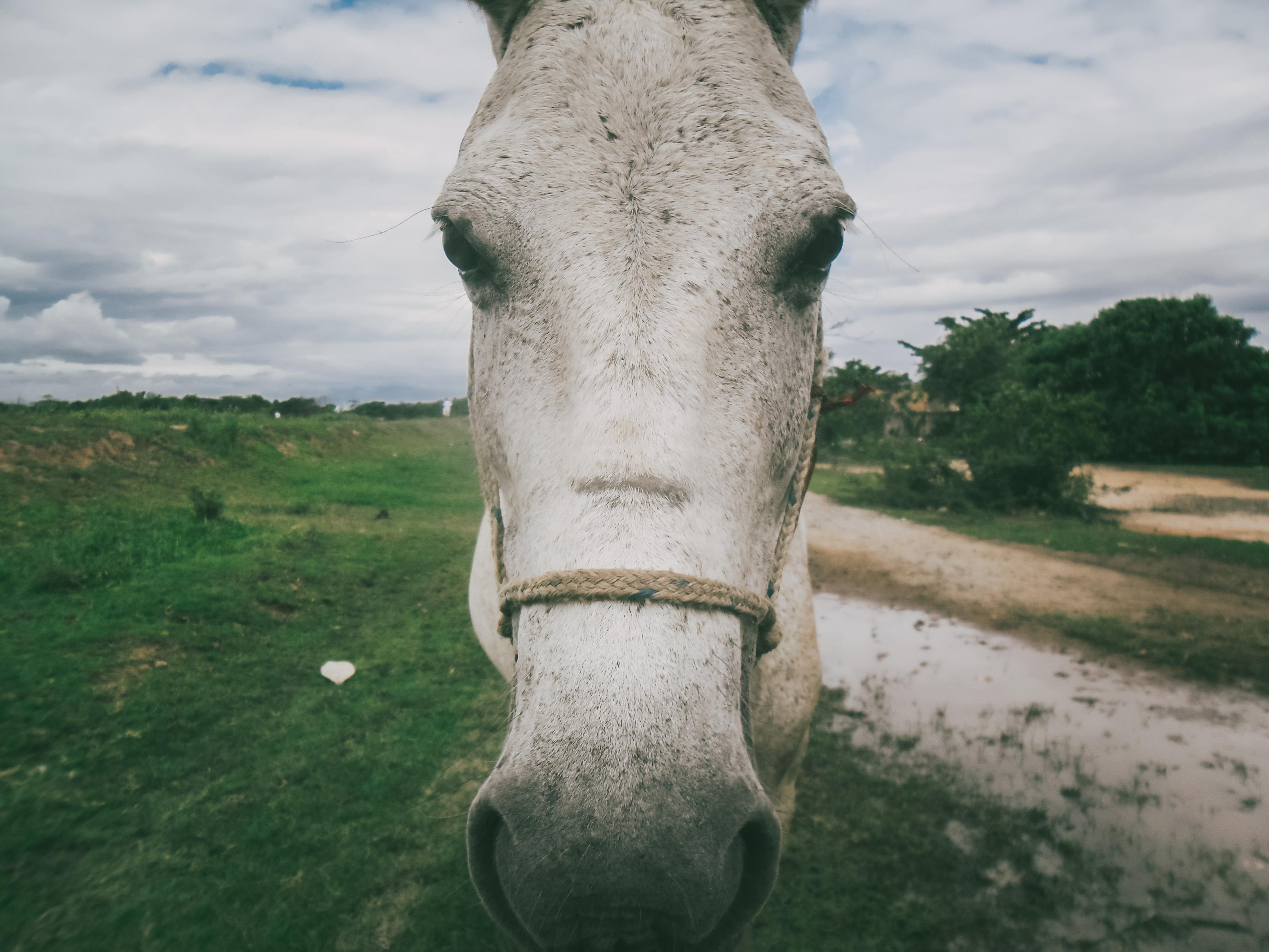 Foto: Cauã da Silva (10 anos)
